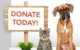Donate a day's wages to charity day – May 9
