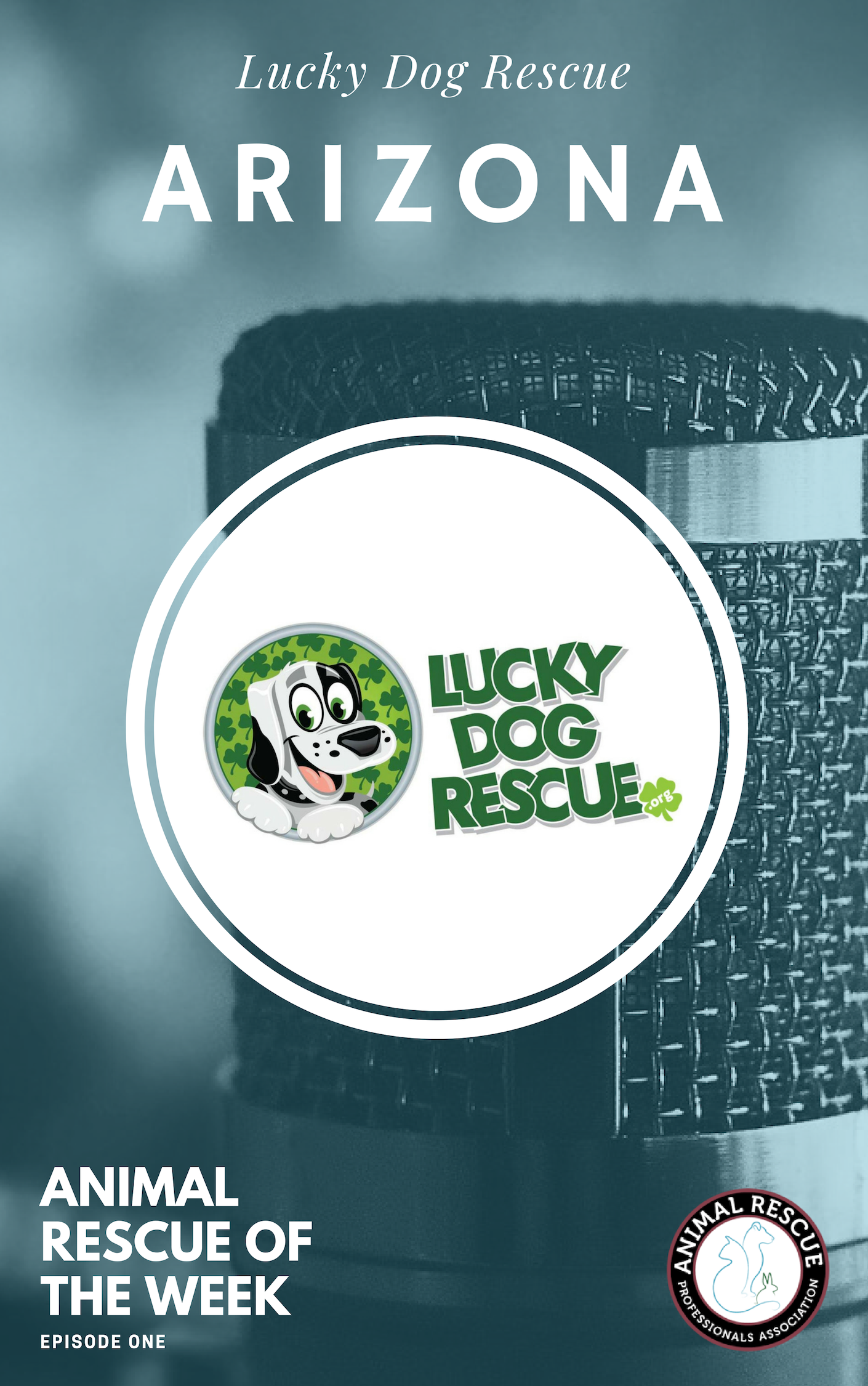 1. Lucky Dog Rescue_AZ_Animal Rescue of the Week